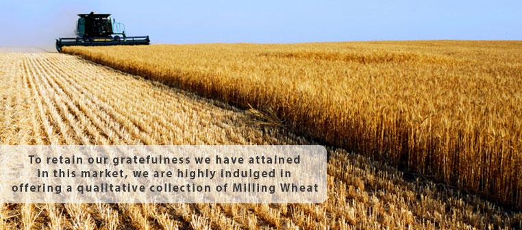 wheat-slider
