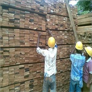 jungle wood-min