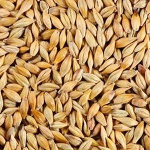 Barleya